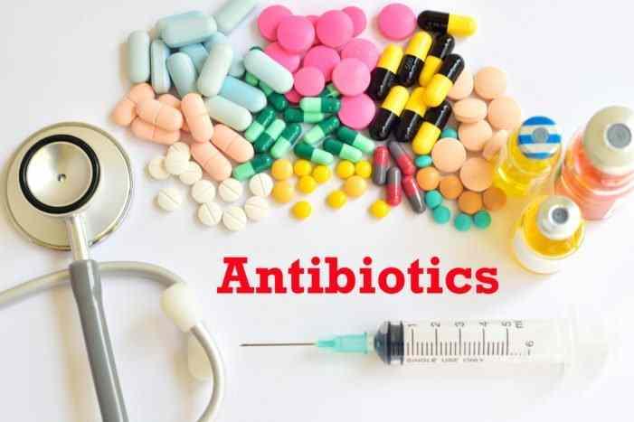 antibiotik unggas